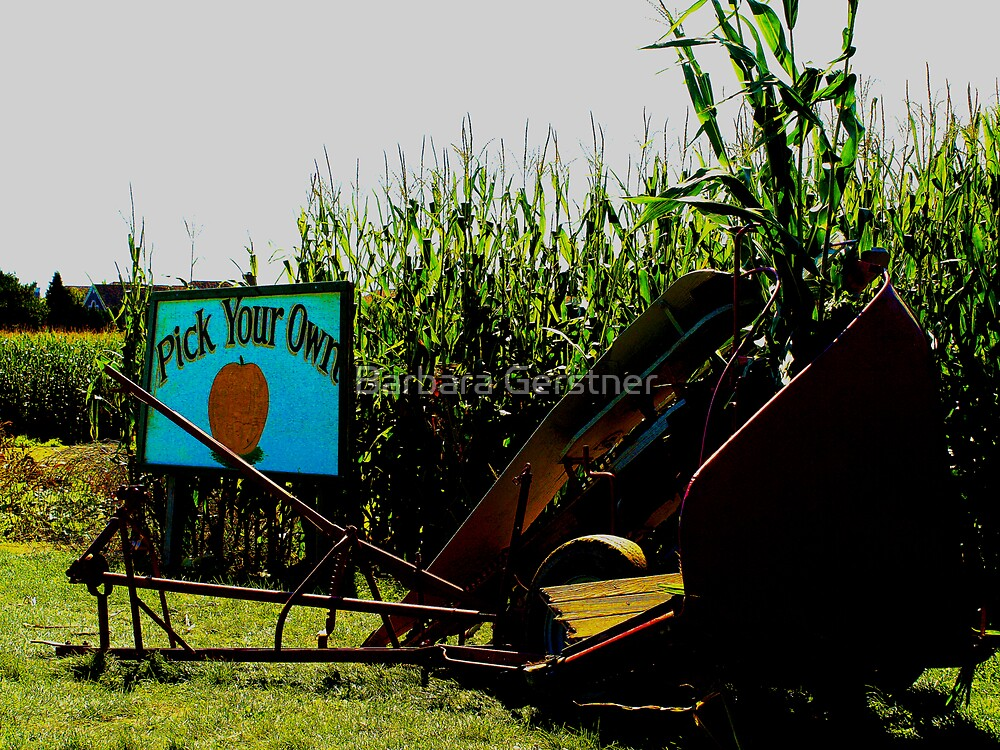 Pick Your Own by Barbara Gerstner