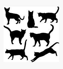 Black and white Cats Body language Photographic Print
