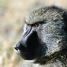 Baboon by Stephie Butler