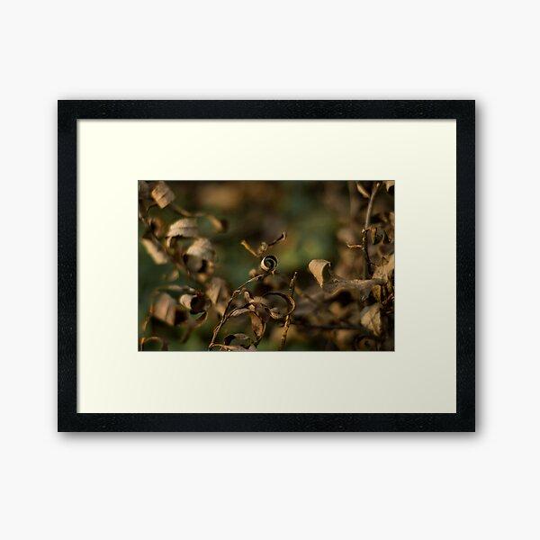 Autumn series Framed Art Print