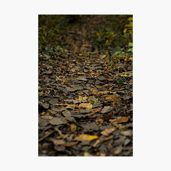 Autumn series Photographic Print
