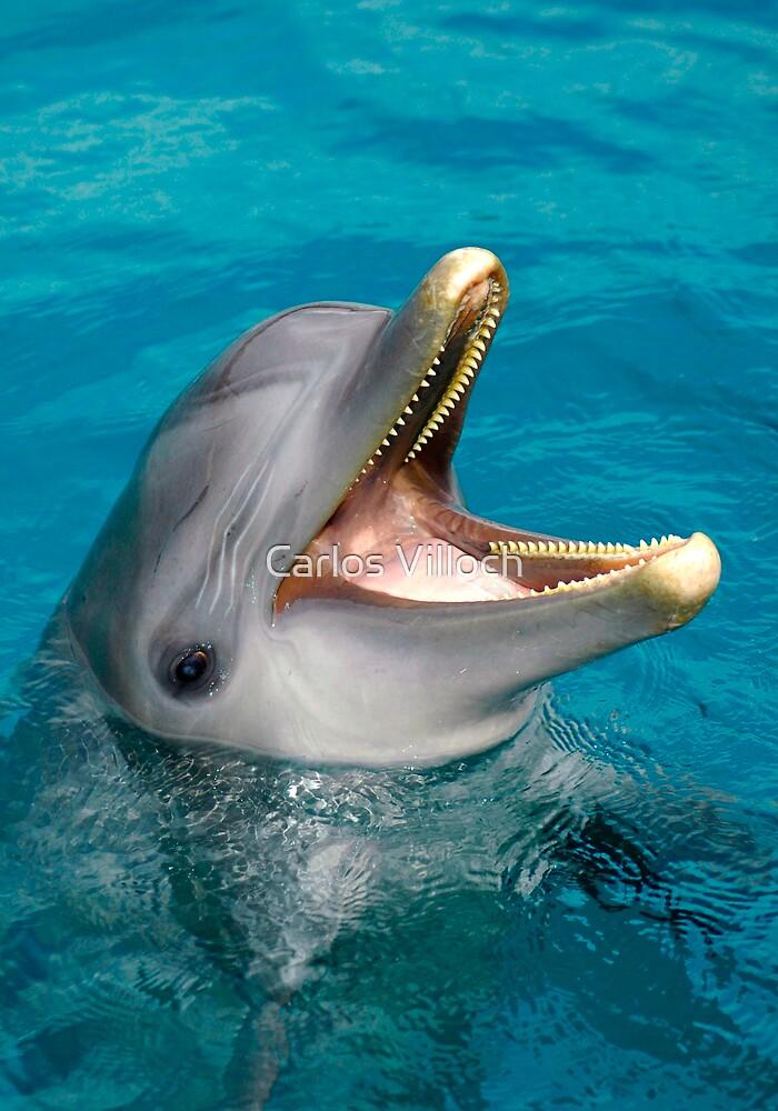 Dolphin smile by Carlos Villoch