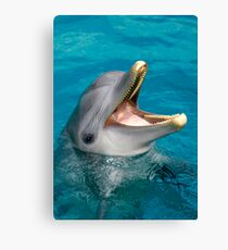 Dolphin smile Canvas Print