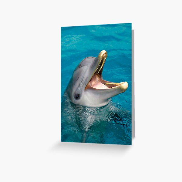 Dolphin smile Greeting Card