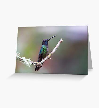 Magnificent hummingbird - Costa Rica Greeting Card