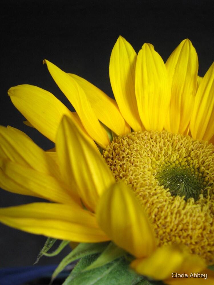 Sunny Sunflower by Gloria Abbey