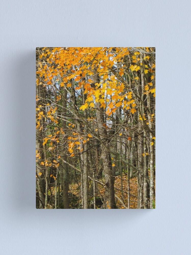 Alternate view of Autumn woods Canvas Print