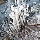 Ice Flower by zoopita