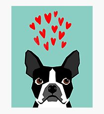 Boston Terrier - Hearts, Cute Funny Dog Cute Valentines Dog, Pet, Cute, Animal, Dog Love,  Photographic Print