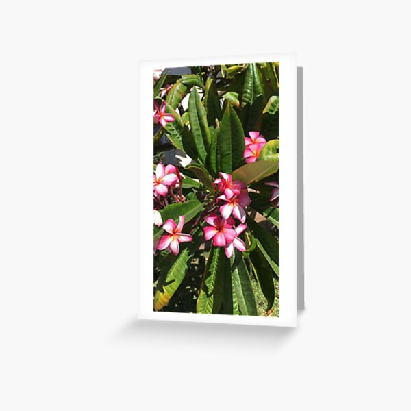 Beautiful Summer Flowers Greeting Card