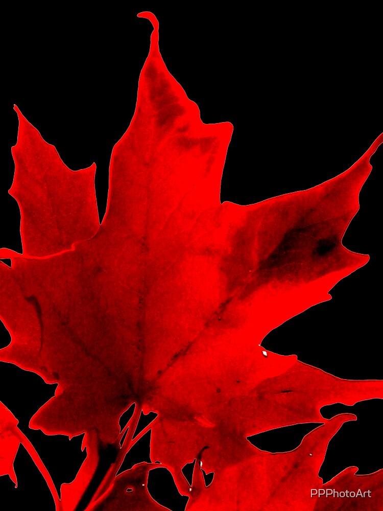 Maple Leaf  by PPPhotoArt