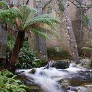 Flowing Tasmania by Leeo