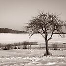 Winter Impressions by Evelyn Laeschke