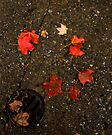 Fallen Leaves by Mary Campbell