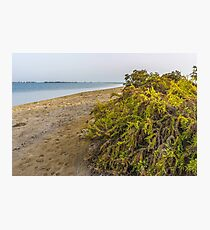 BEACH SHRUBS Photographic Print