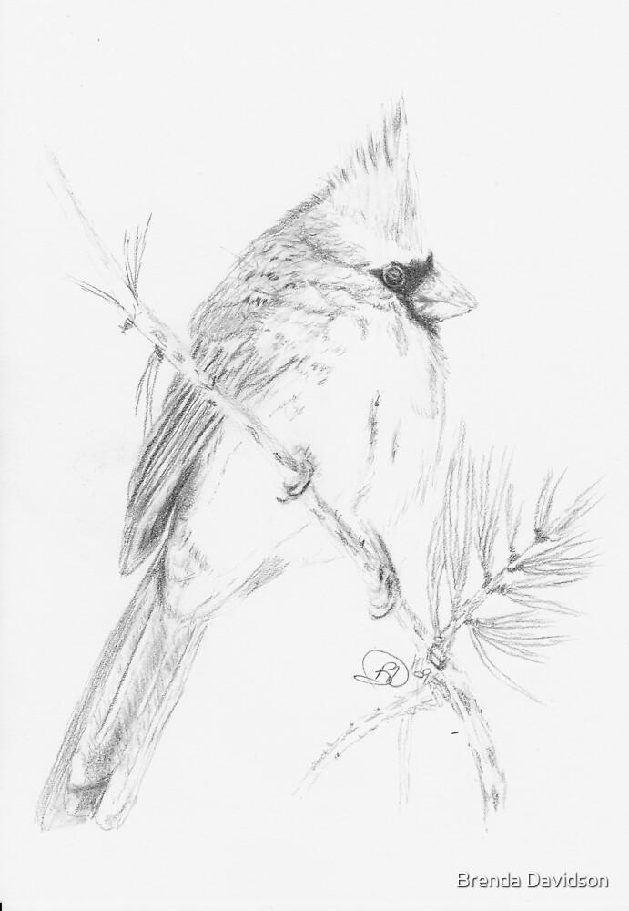 Cardinal by Brenda Davidson