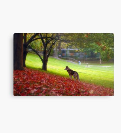 Just another fall day Metal Print