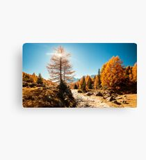 Autumn trekking in the alpine Pusteria valley Canvas Print