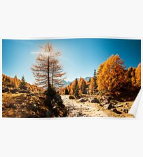 Autumn trekking in the alpine Pusteria valley Poster