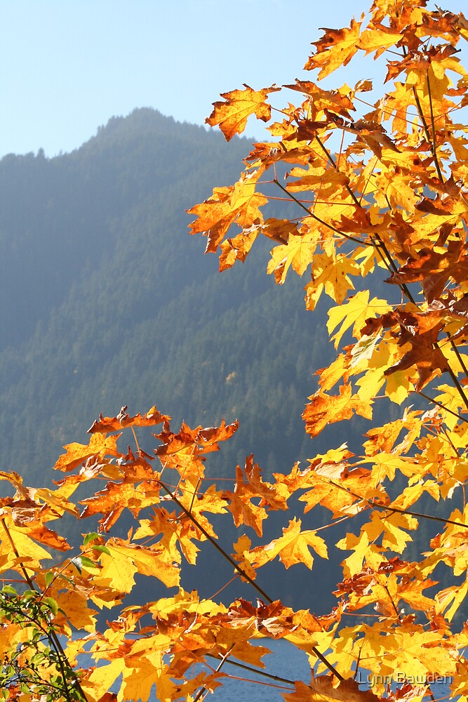 """""""Autumn"""" by Lynn Bawden"""