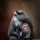 De Brazza's Monkey Babysitting by Brian Tarr