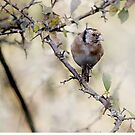Goldfinch by RosaMarieAshby