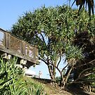 Pandanus Tectorius Overlooking Coolum Beach by Keith Richardson