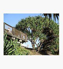 Pandanus Tectorius Overlooking Coolum Beach Photographic Print