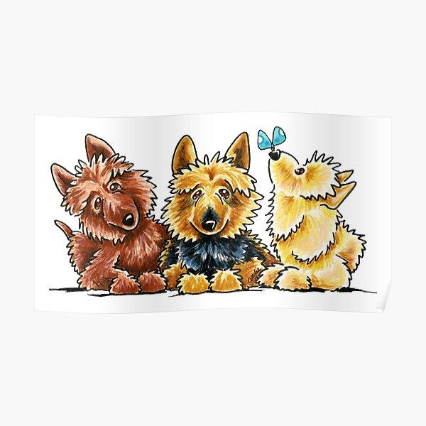 3 Australian Terriers Poster