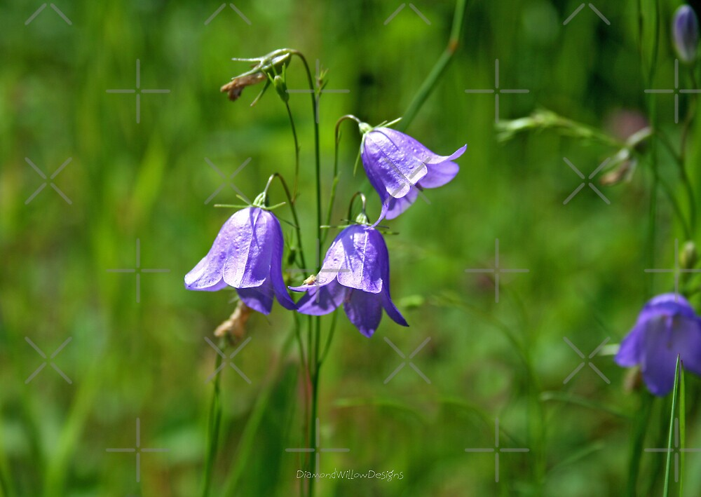 Harebell by Vickie Emms