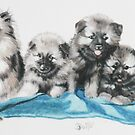 Keeshond Puppies by BarbBarcikKeith