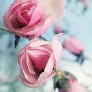 Laura Ashley Inspired Springtime Magnolias on Blue Sky by Lisa Knechtel