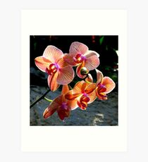 Orchids from Tennesse...  Art Print