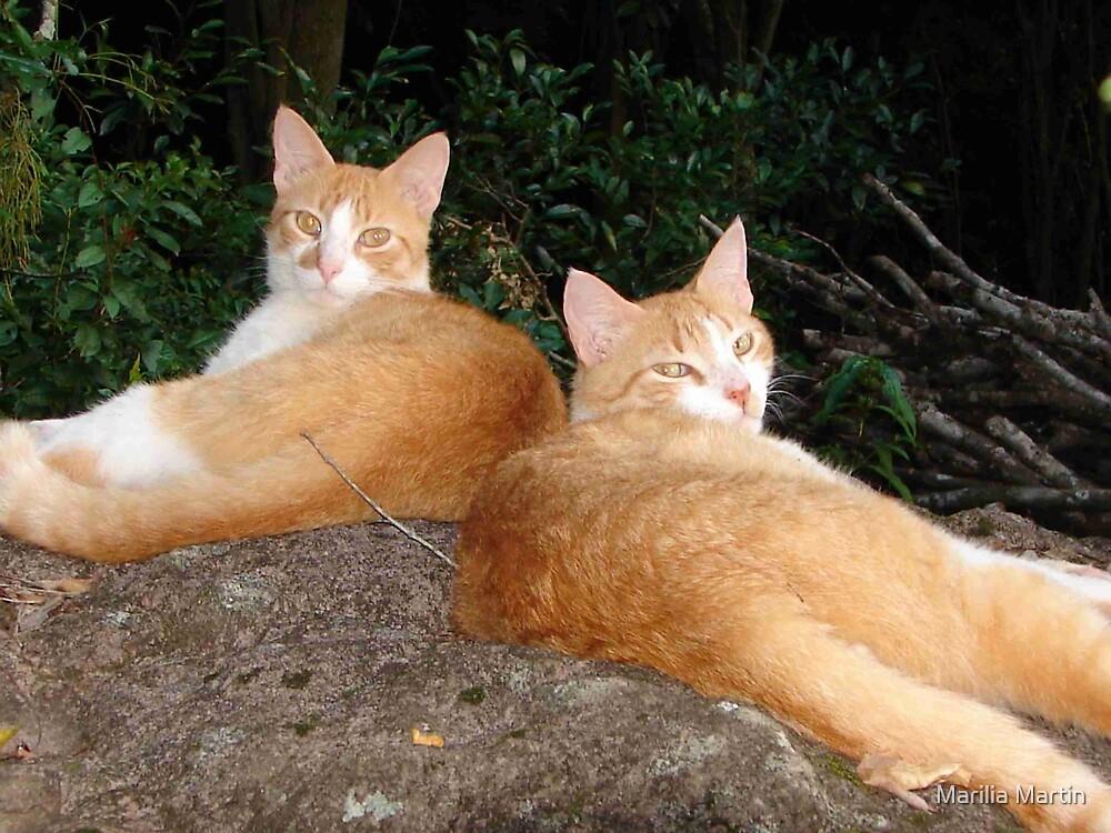 My two cats by Marilia Martin