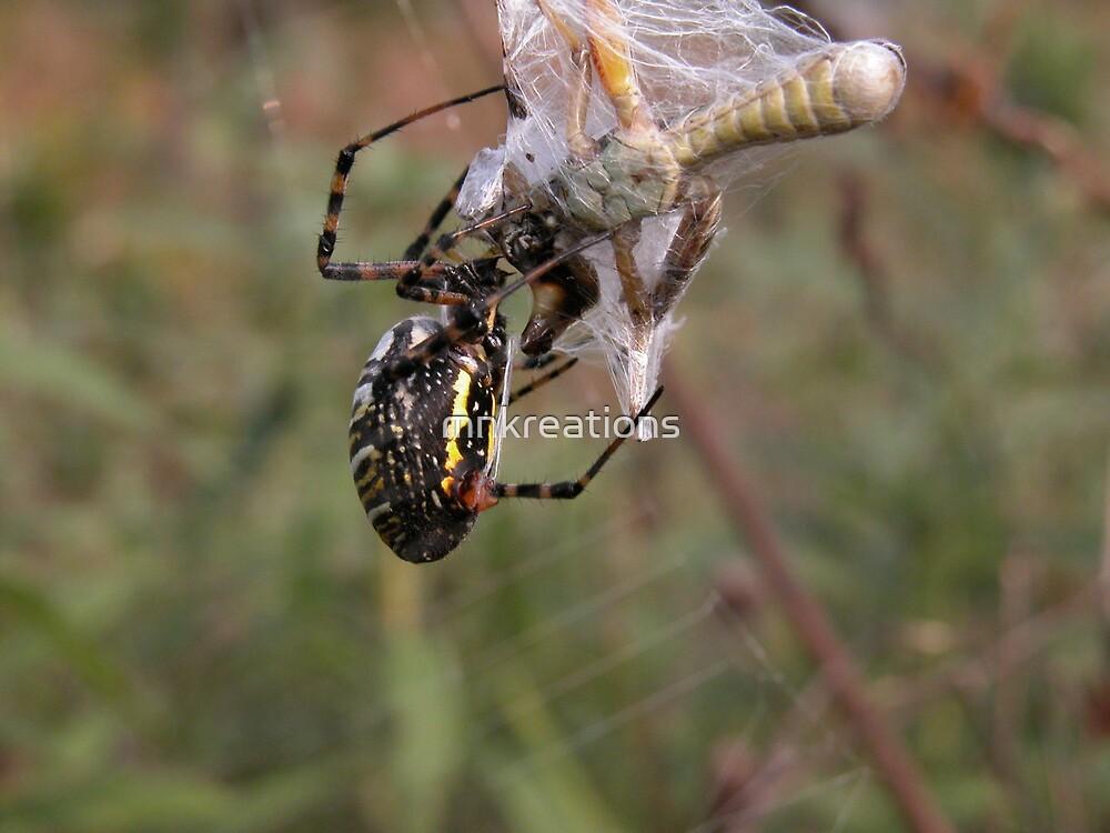Argiope Trifasciata White Backed Garden Spider and Grasshopper by mnkreations