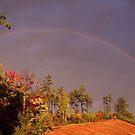 RAINBOW by Terri~Lynn Bealle