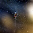 A Spider and Her Web by TJ Baccari Photography