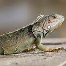 Reptilia 2 by John Velocci