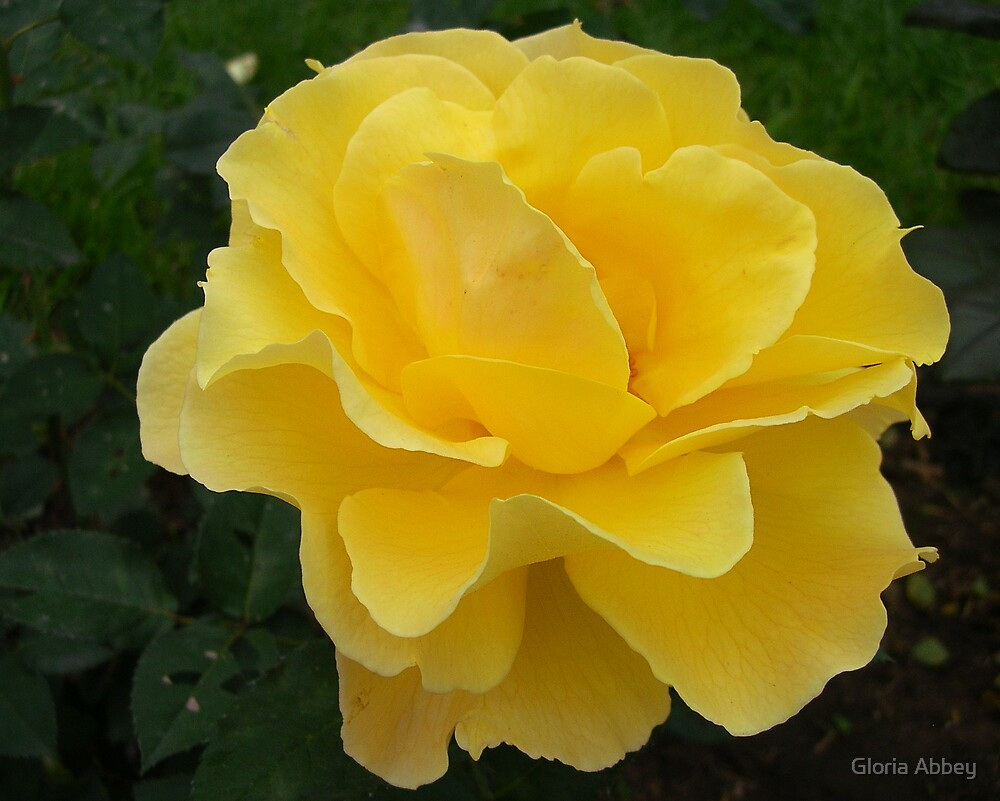 R is for Roses by Gloria Abbey
