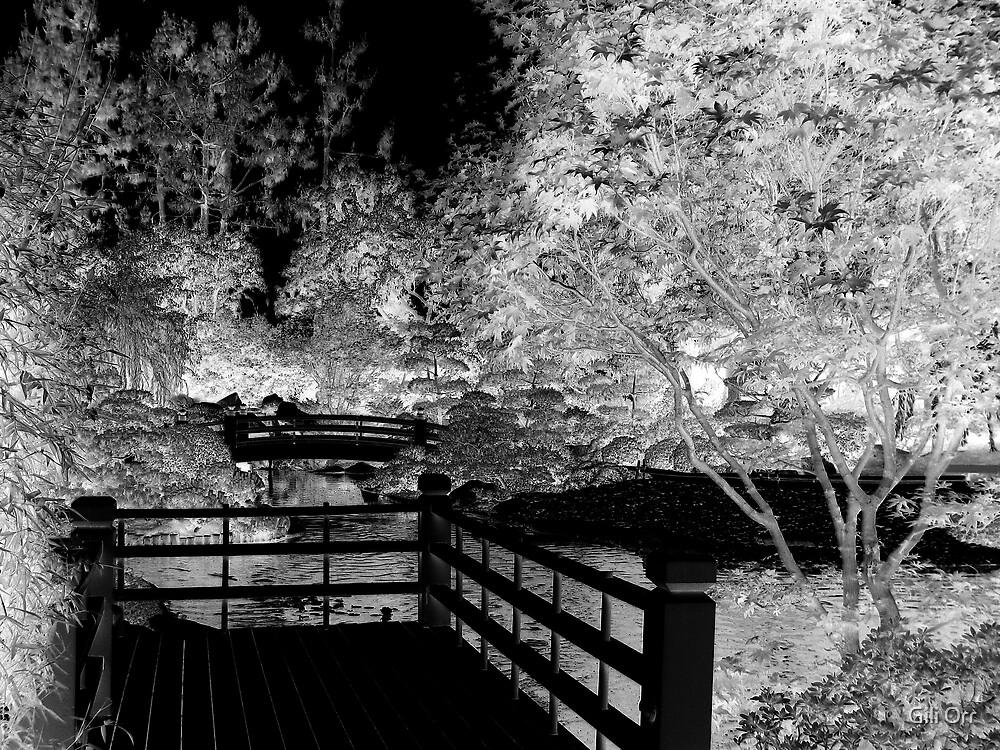 Enchanted garden by Gili Orr