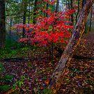 Smokey Mountains Fall by photosbyflood