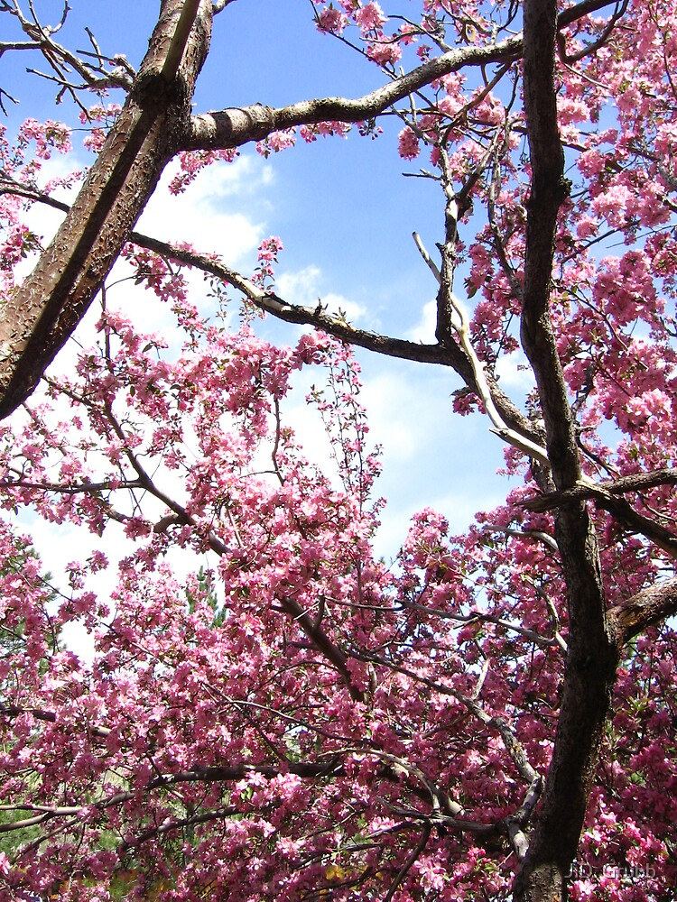 Pink, Spring Illuminated, Colorado Springs, CO 2008 by J.D. Grubb