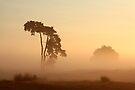 Morning Mist by Jo Nijenhuis