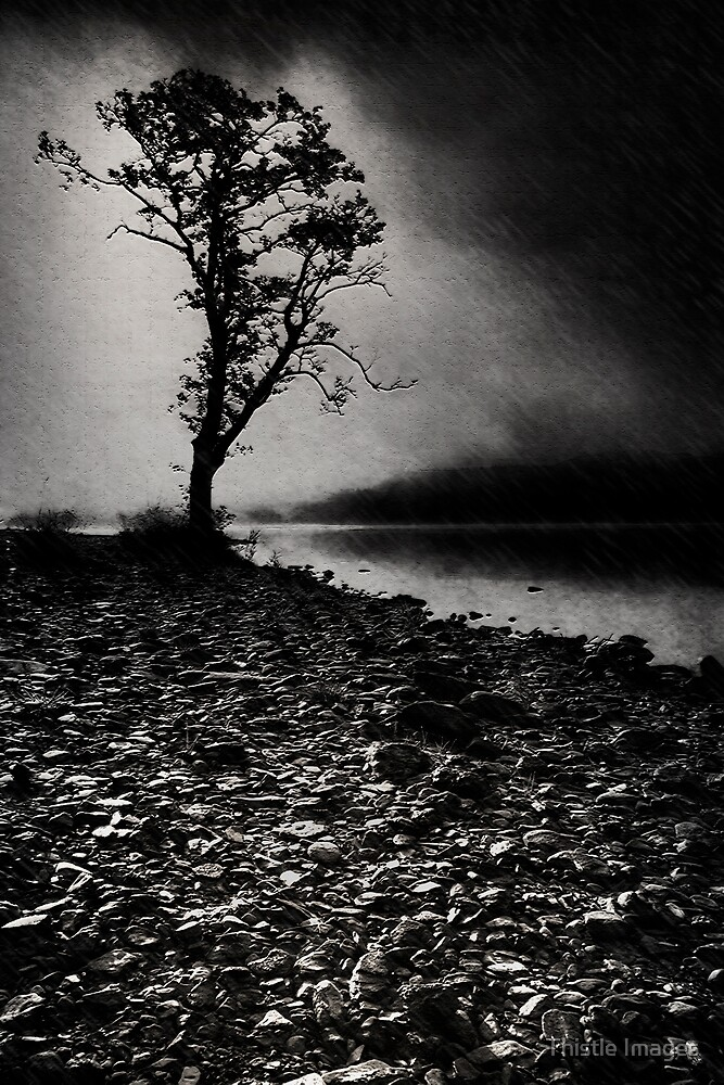 Tree in the rain by Thistle Images