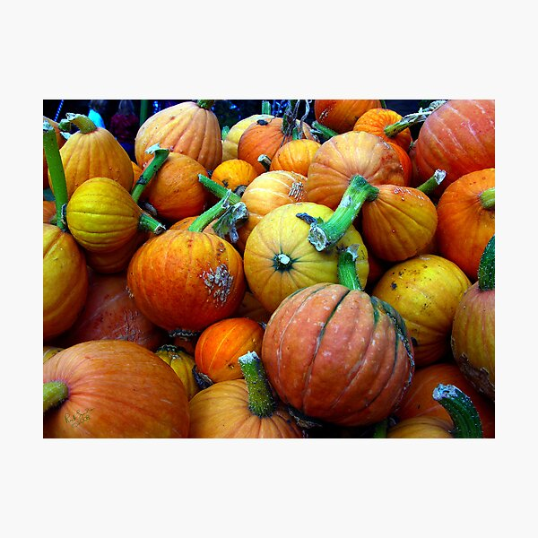 Whidbey Pumpkins Three Photographic Print