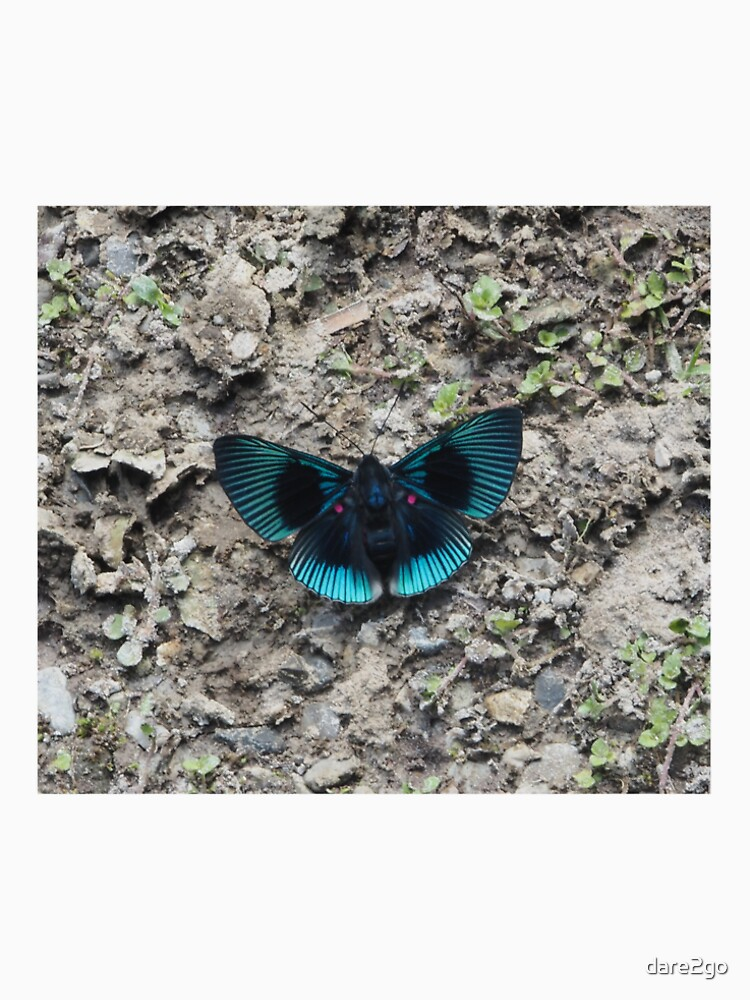 A stunning blue and black striped butterfly von dare2go