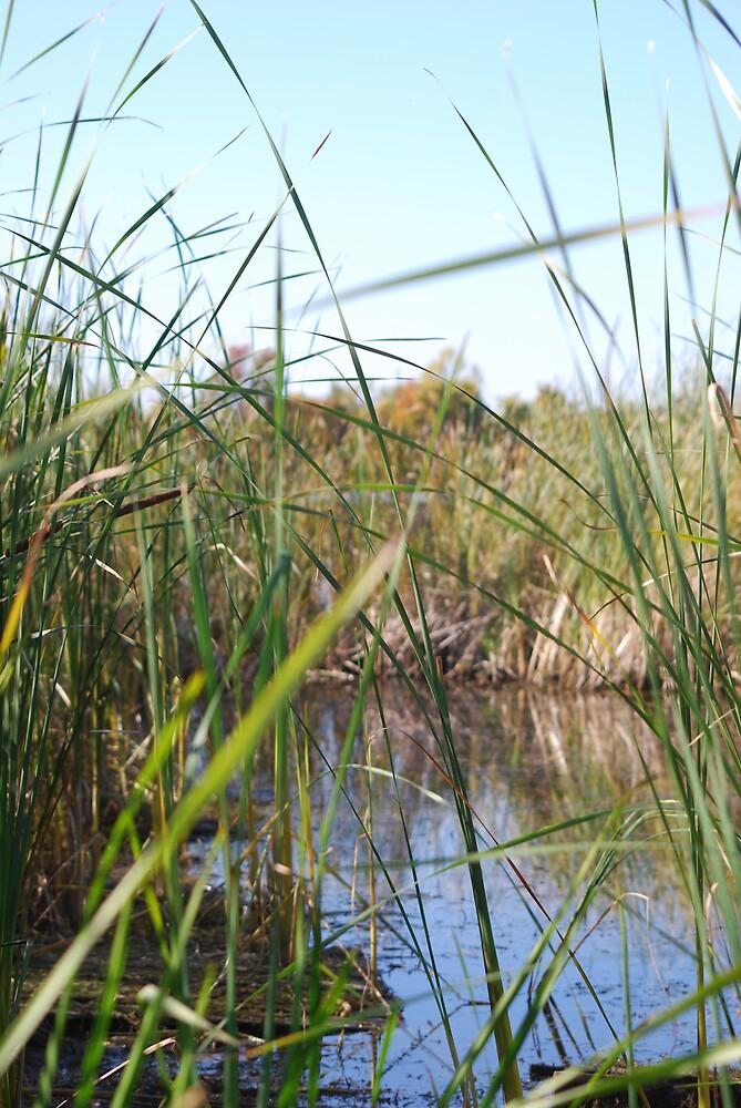 Grand Isle Marsh by TonyaP