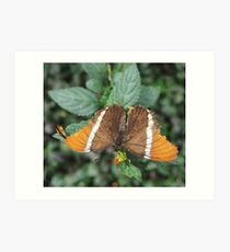 close-up of an orange-brown butterfly Art Print