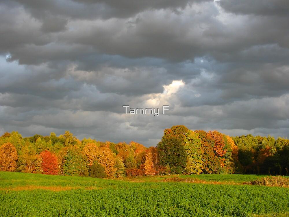 Stormy Autumn Sky by Tammy F