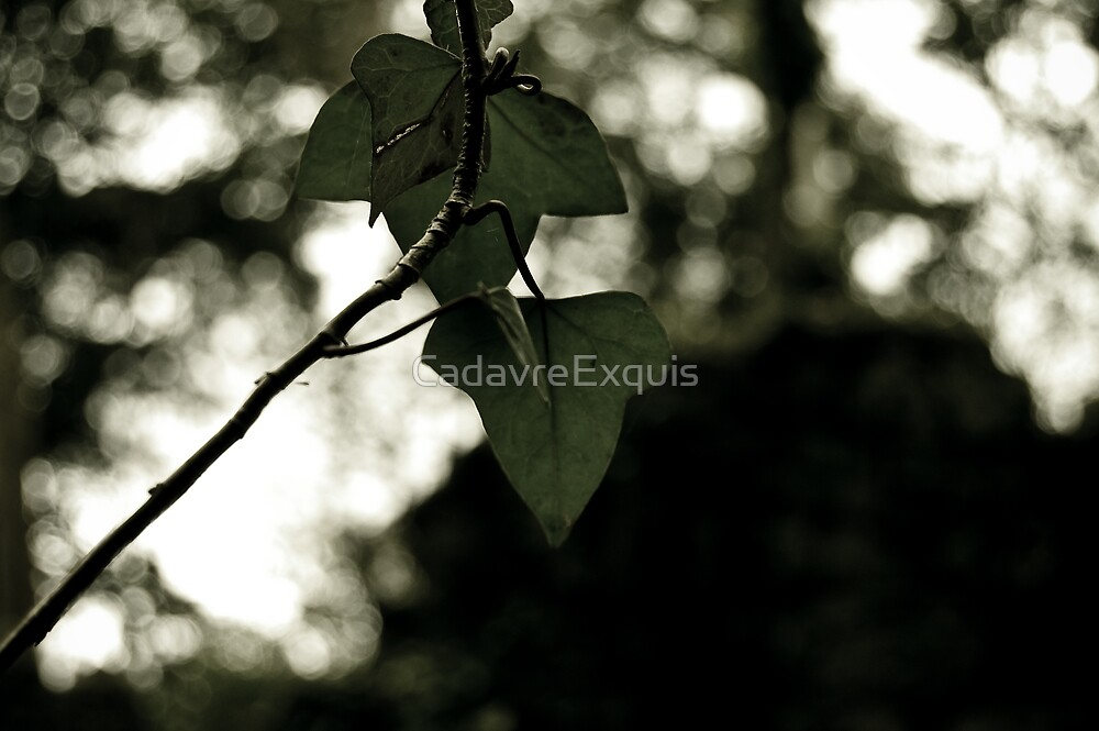 [H]eras by CadavreExquis